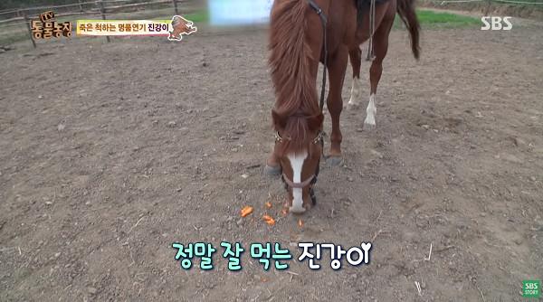 南韓「軟爛馬」裝馬鞍就裝死! 翻白眼拒載客完美詮釋不想上班
