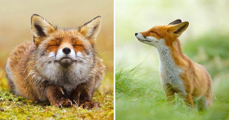 臥底攝影師終於拍得到 記錄「狐狸BB」的日常生活:人家才不狡猾呢!